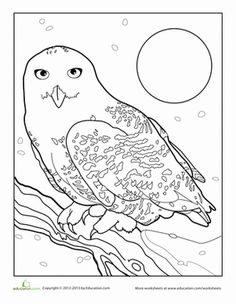 236x304 Free Snowy Owl Coloring Page