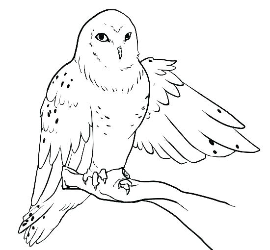 550x510 Cartoon Owl Coloring Pages Snowy Owl Coloring Page Cartoon Owl