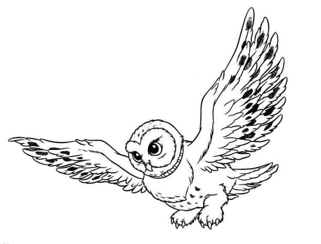1024x779 Cartoon Snowy Owl Coloring Pages