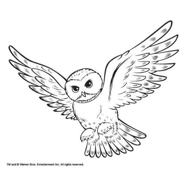 600x600 Coloring Snowy Owl Hedwig Picture Liked On Polyvore Featuring
