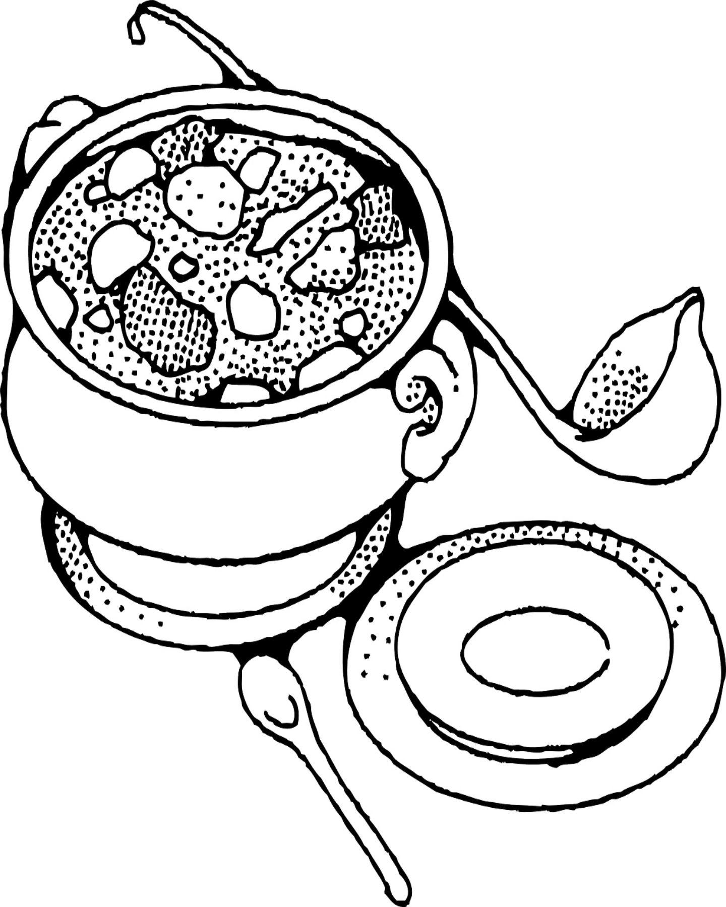 1440x1800 Free Printable Soup Coloring Page Soups Free