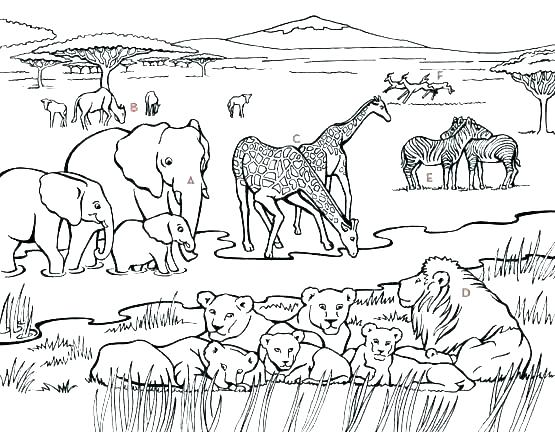 555x432 Desert Coloring Pages South Africa Coloring Pages