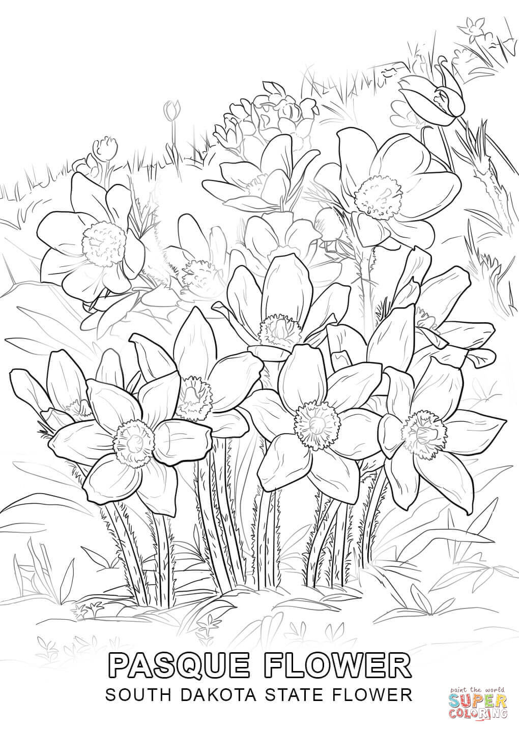 1020x1440 South Dakota State Flower Coloring Page