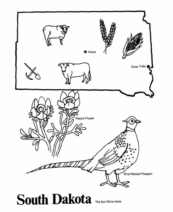 564x690 Usa Printables State Of South Dakota Coloring Pages