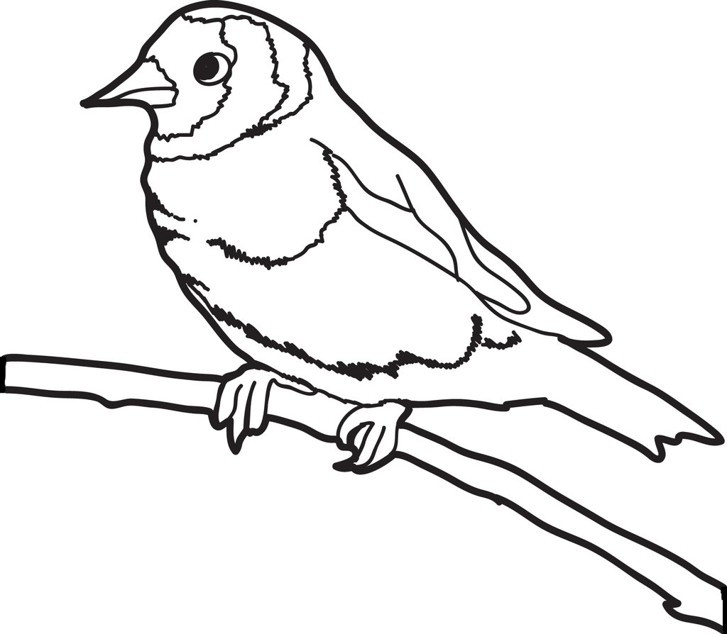 1024x894 Free, Printable Sparrow Coloring Page For Kids