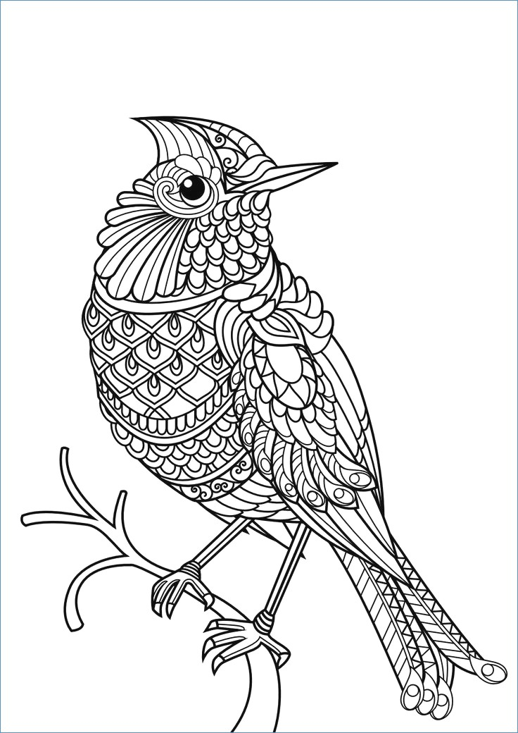 736x1040 Sparrow Bird Winter Animal Coloring Pages