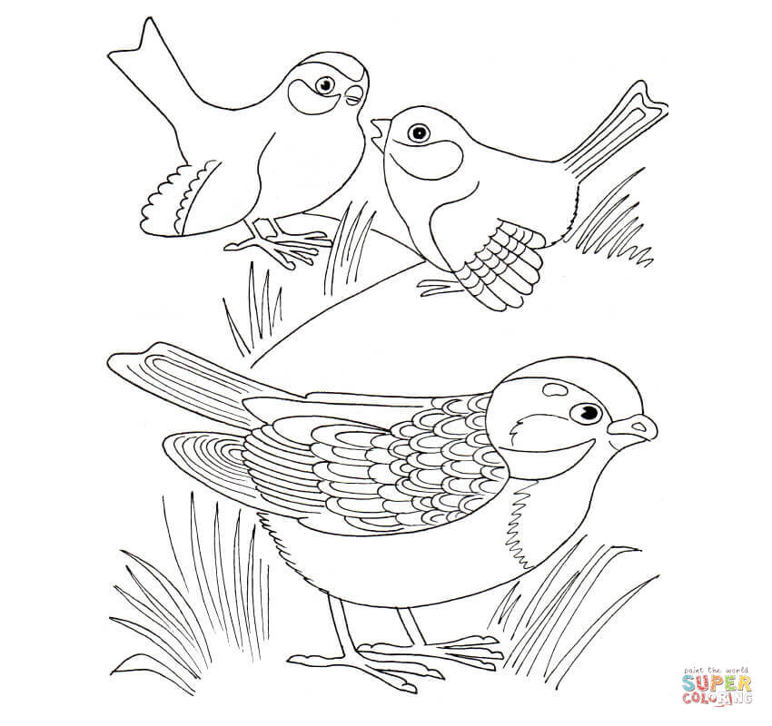 850x800 Sparrow Download Coloring Page