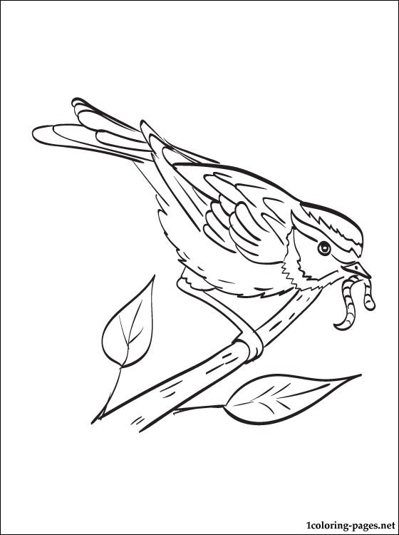 560x750 Sparrow Coloring Page For Kids Coloring Pages