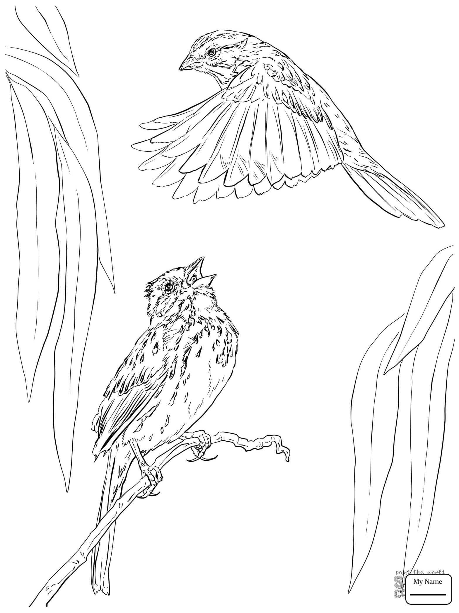 1567x2089 Best Of Bird Sparrow Coloring Page Design Printable Coloring Sheet