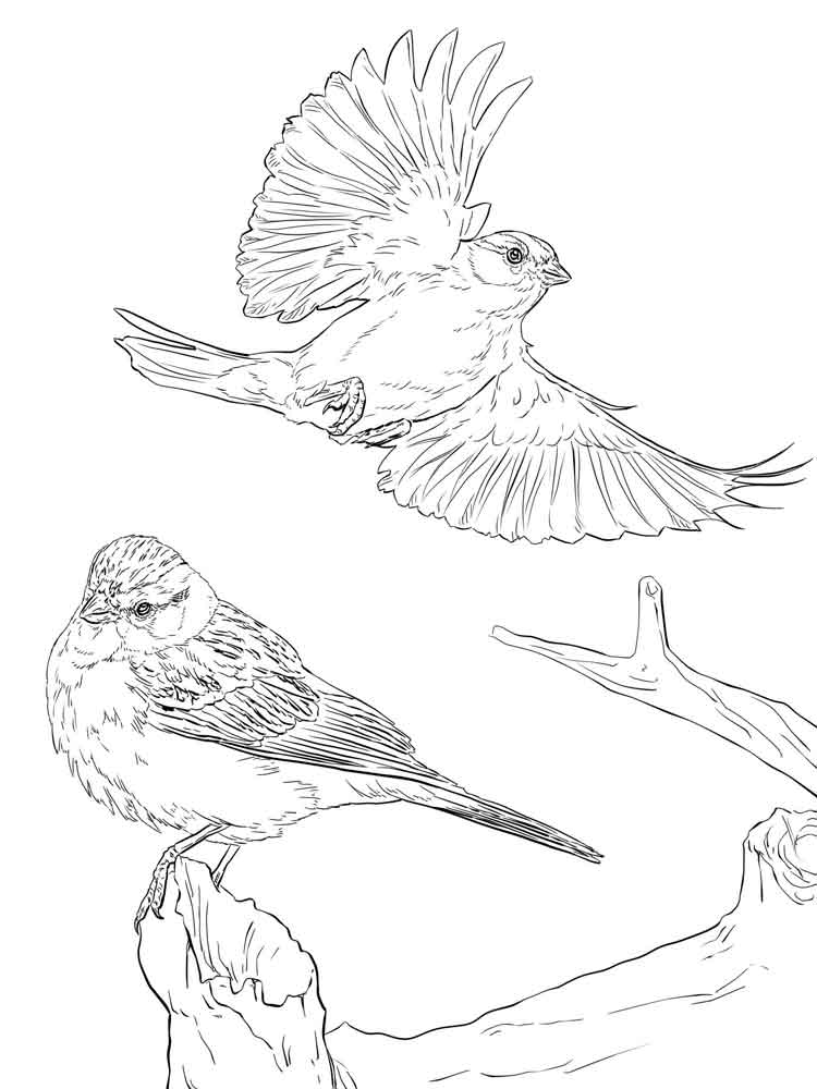 750x1000 Sparrow Coloring Pages Download And Print Sparrow Coloring Pages