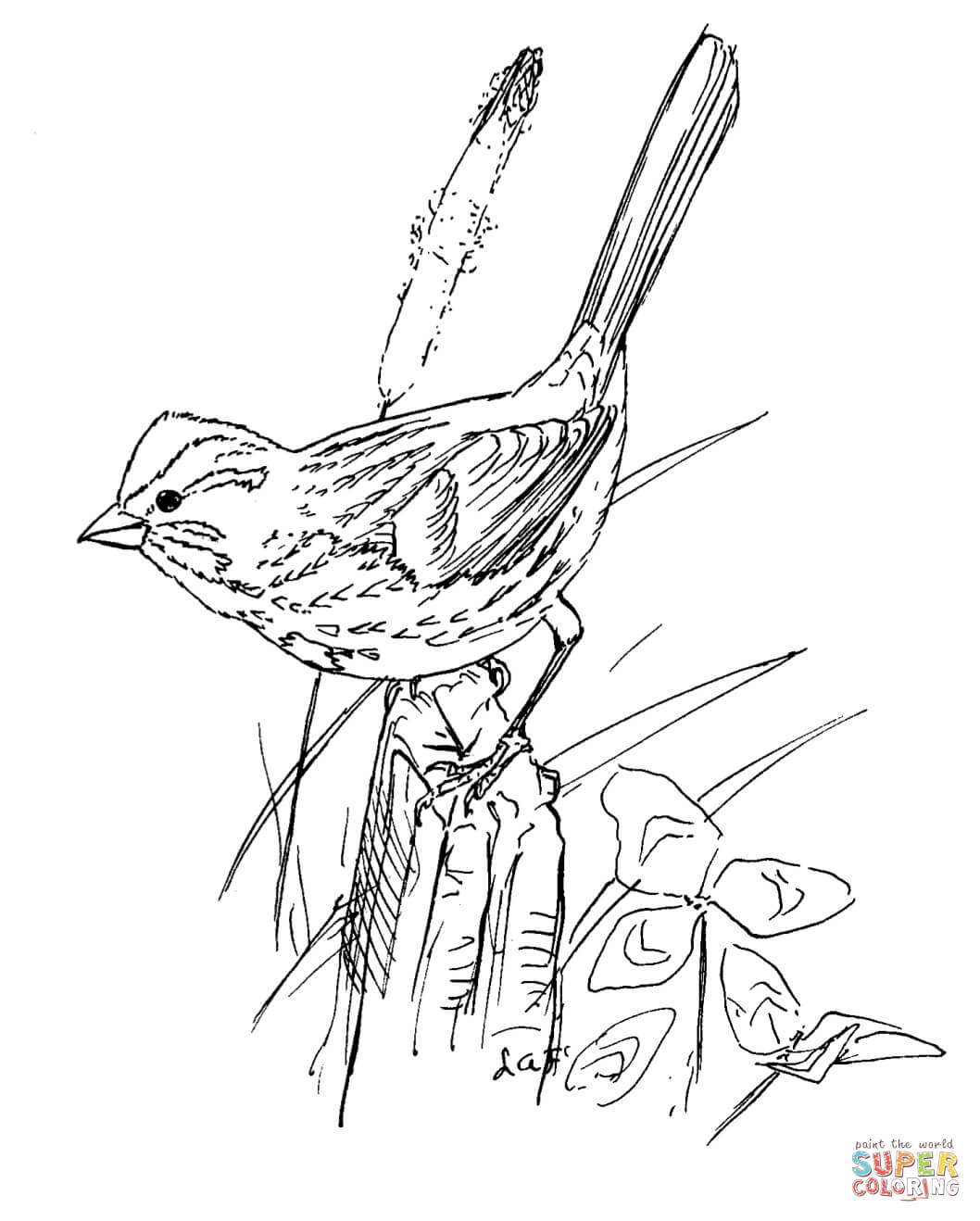1058x1318 Realistic Bird Coloring Pages Song Sparrow Page Free Printable