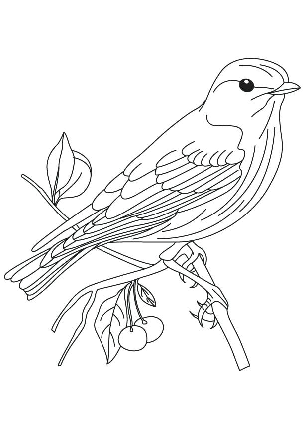 613x860 Bluebird Coloring Page Sparrow Coloring Page Eastern Bluebird
