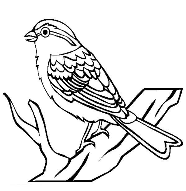 600x614 Chipping Sparrow Bird Coloring Page Color Luna