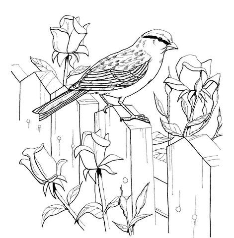 471x480 Chipping Sparrow And Roses Coloring Page Victorian
