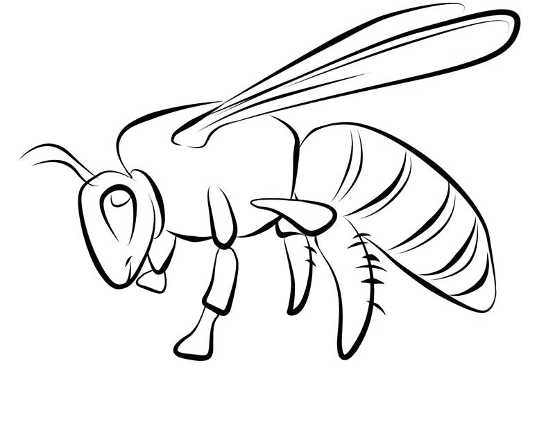 800x612 Bee Coloring Sheet Flying Bumble Bee Coloring Pages Spelling Bee