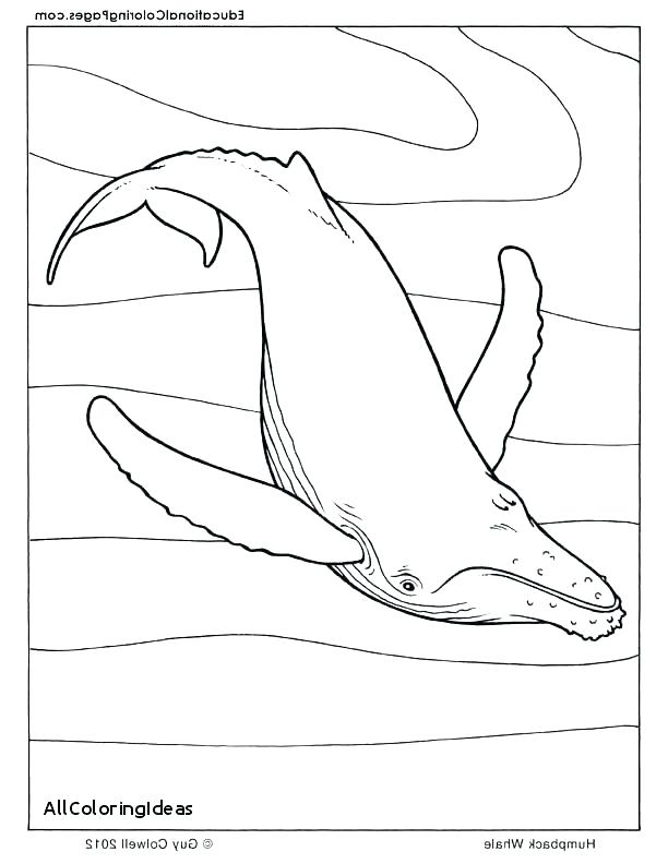 612x792 Sperm Whale Coloring Page Humpback Whale Humpback Whale Coloring