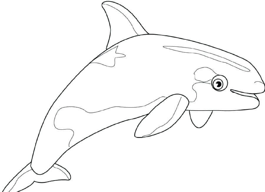 900x653 Sperm Whale Coloring Page