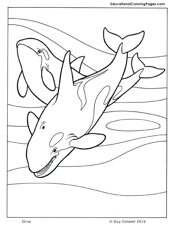 612x792 Whale Coloring Pages Killer Whale Coloring Page Coloring Page