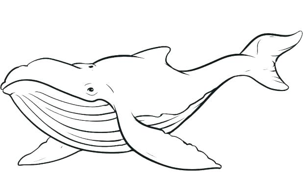 618x362 Killer Whale Coloring Page