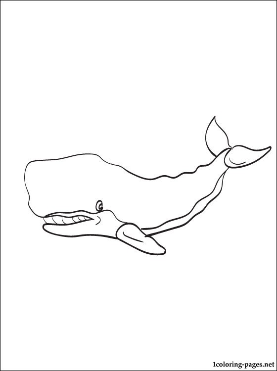 560x750 Cachalot Or Sperm Whale Coloring Page Coloring Pages