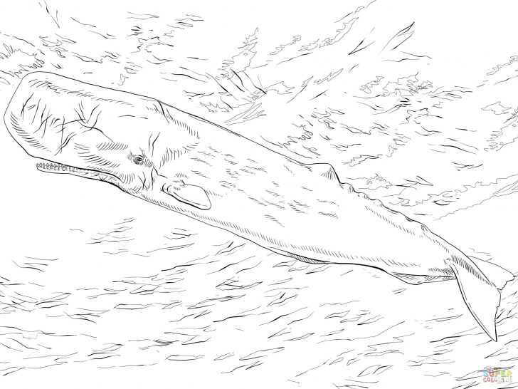 728x546 Coloring Pages For Kids Free Sperm Whale Or Page Printable Narwhal