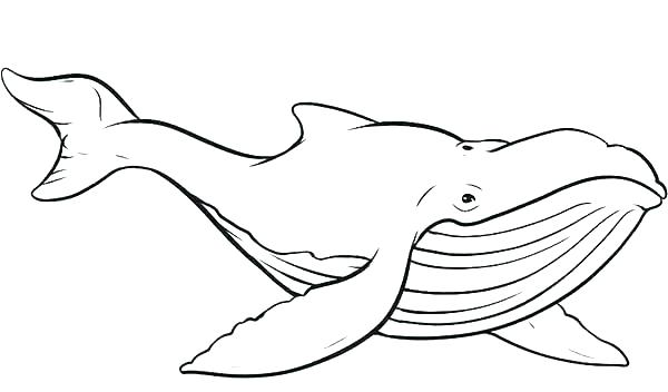 600x352 Coloring Pages Of Whales Whales Coloring Pages Whale Coloring Page