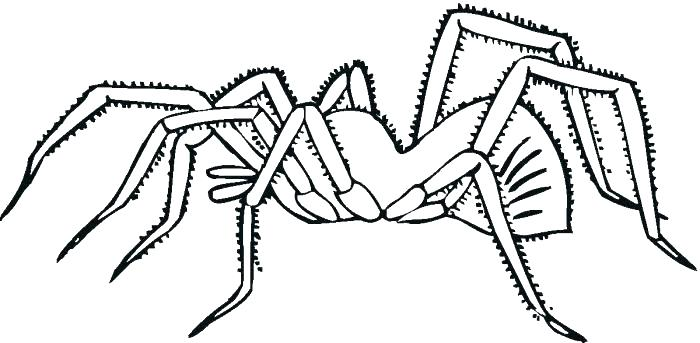 700x343 Spider Color Page Spider Web Coloring Page Printable Spider Web