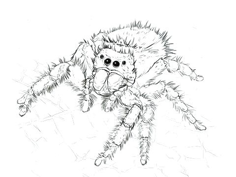 480x360 Happy Spider Coloring Page Cute Spider Spider Spider Web Coloring