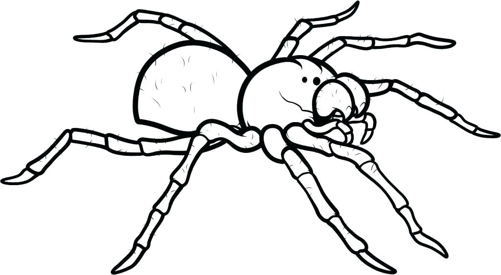 1024x563 Spiders Coloring Pages Spiders Coloring Pages Spider Coloring Page