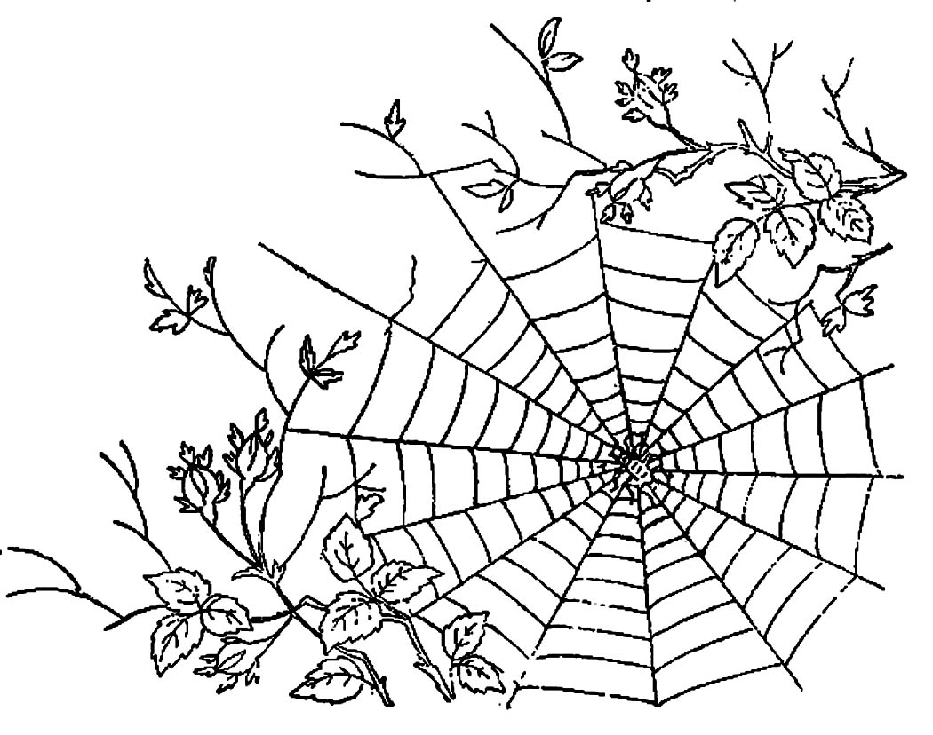1050x828 Printable Spider Web Coloring Pages Me Image