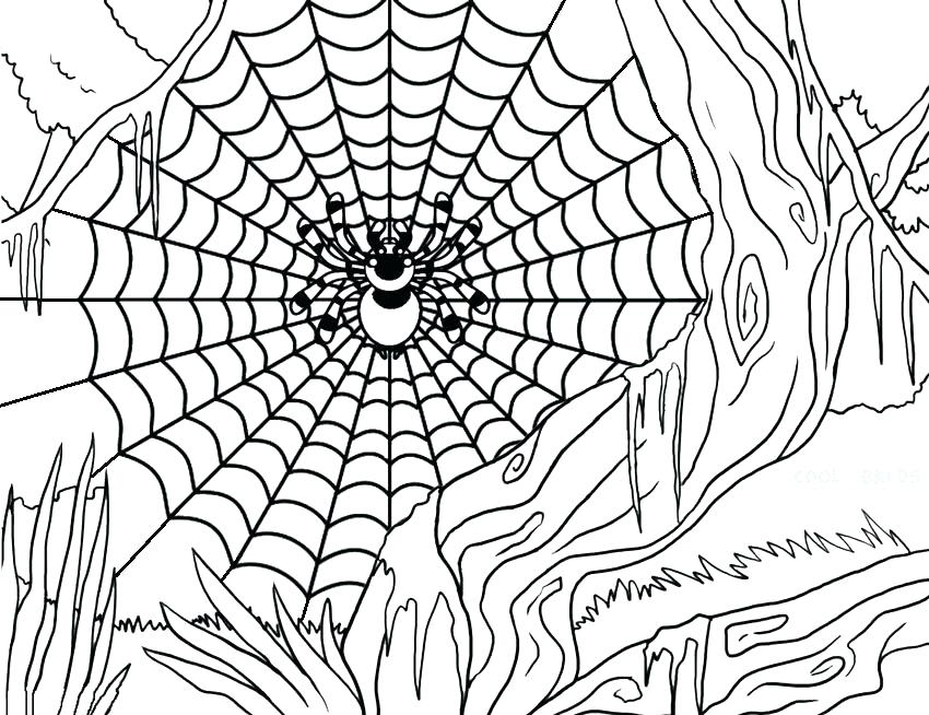 850x654 Spider Coloring Page Spider Color Page Spider Web Coloring Pages