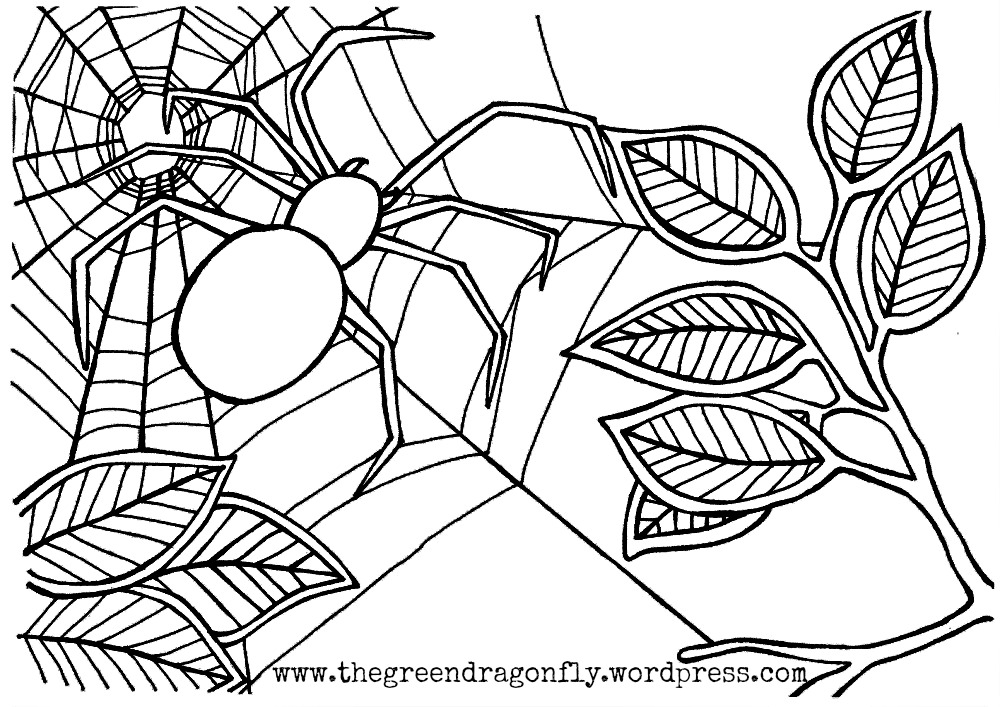 1000x707 Stylish Design Spider Web Coloring Pages To Print For Kids