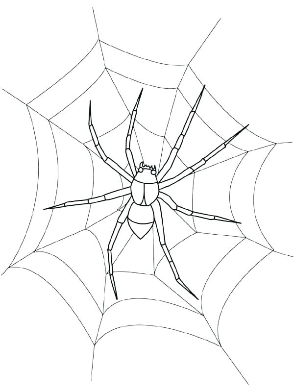 600x800 Spider Web Coloring Page