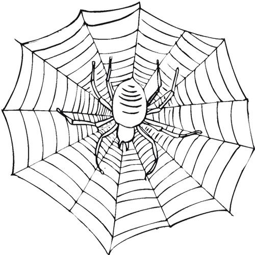 500x500 Fanciful Spider Web Coloring Pages To Print For Kids