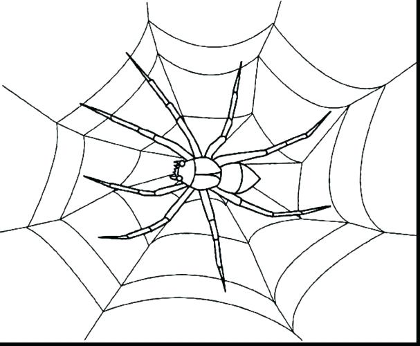 607x500 Coloring Page Spider Web Coloring Page Spider Web Coloring Pages