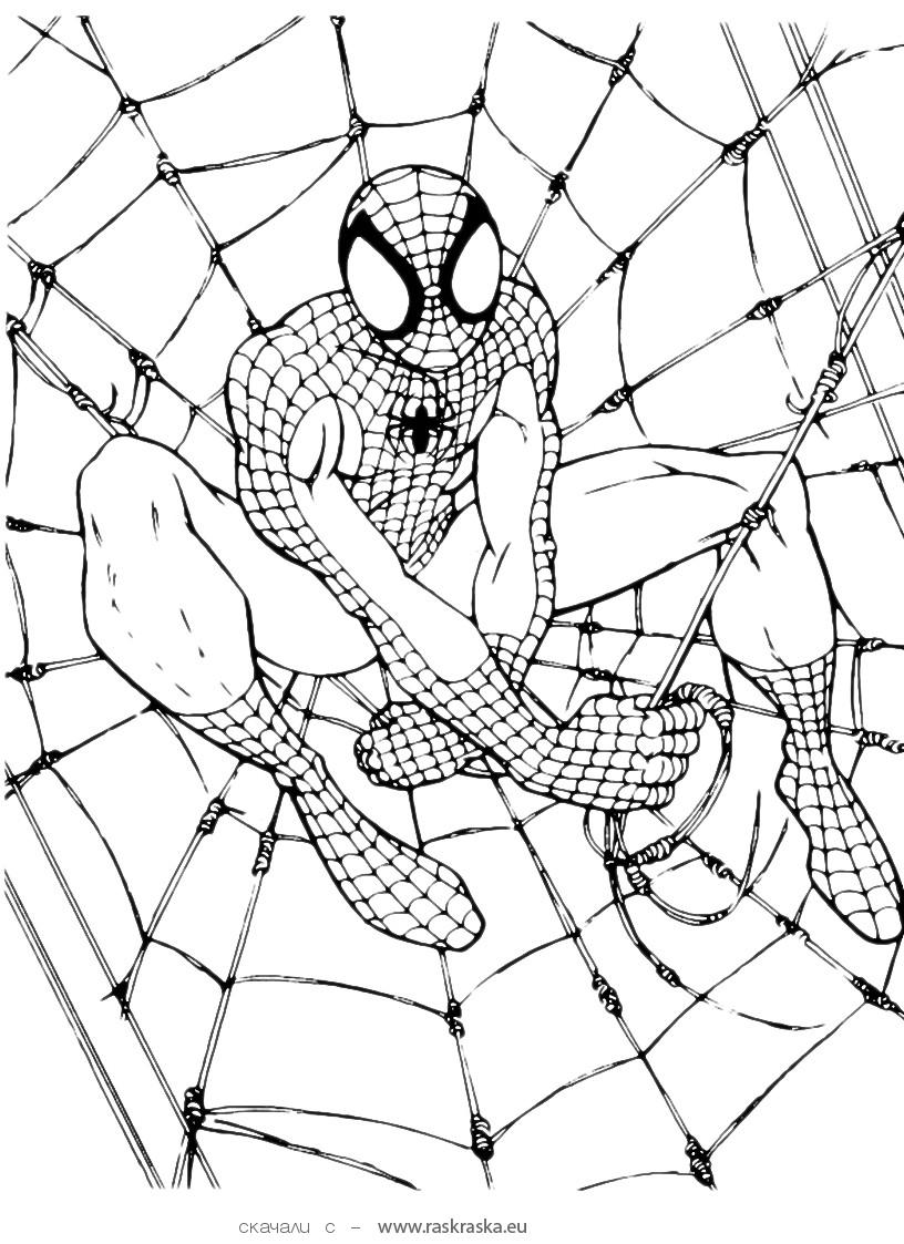 816x1123 Free Printable Spiderman Coloring Pages For Kids
