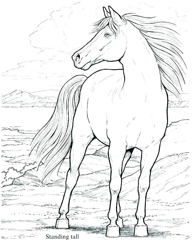 615x770 Spirit Stallion Of The Cimarron Coloring Pages Stallion Coloring