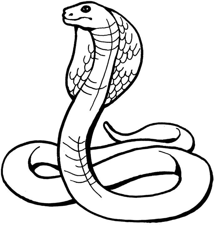 Spitting Cobra Coloring Pages