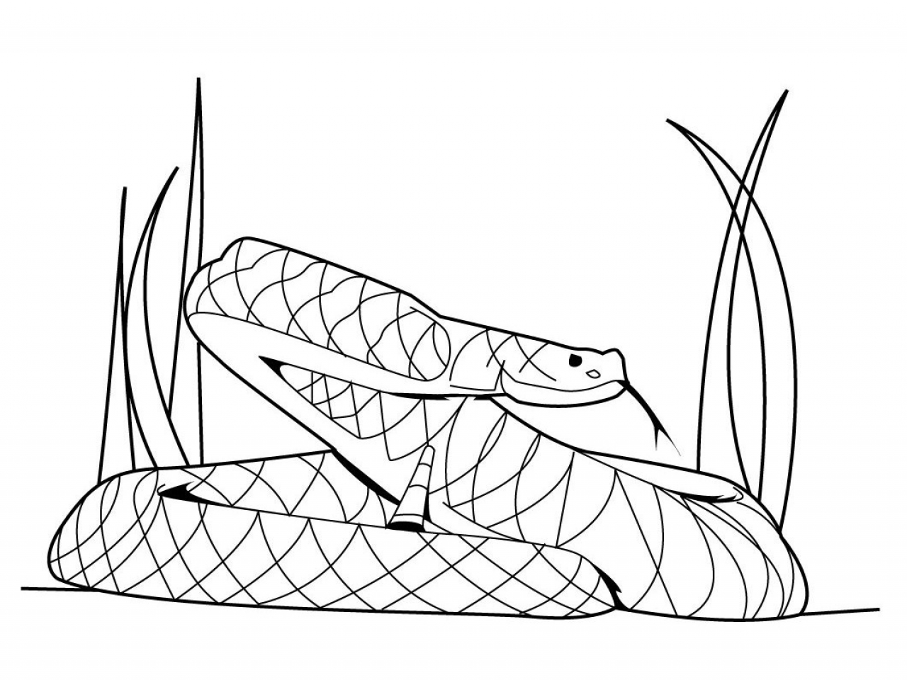 1280x960 Cobra Coloring Pages Snake Snakes Cobras Page