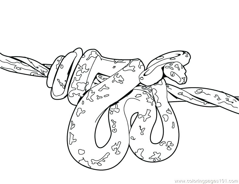 800x618 Coloring Pages Coloring Cobra Snake King Cobra Coloring Pages
