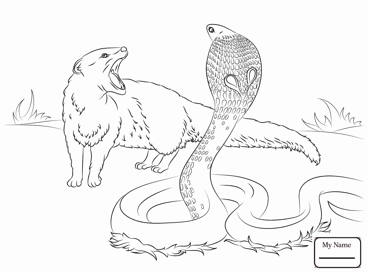 1253x934 Free Coloring Book Printables Awesome Spitting Cobra And Mongoose