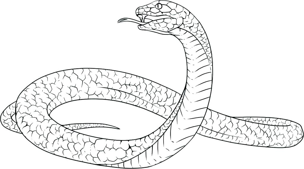 1024x570 Snakes Colouring Pages Clouded Snake Coloring Page Snakes Coloring