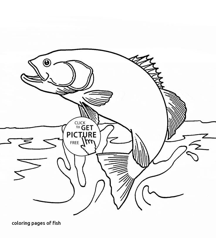 736x811 Coloring Pages Of Fish