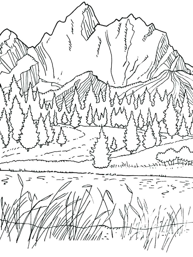750x1000 Mountain Lion Coloring Pages Free Mountain Lion Coloring Pages
