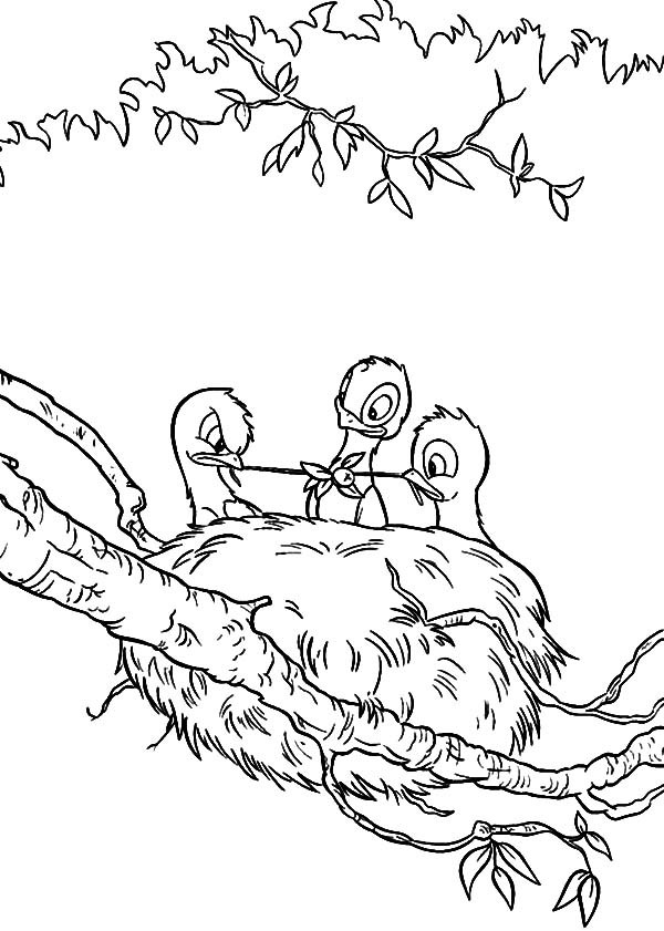 600x841 Baby Bird Eating In Their Bird Nest Coloring Pages Best Place