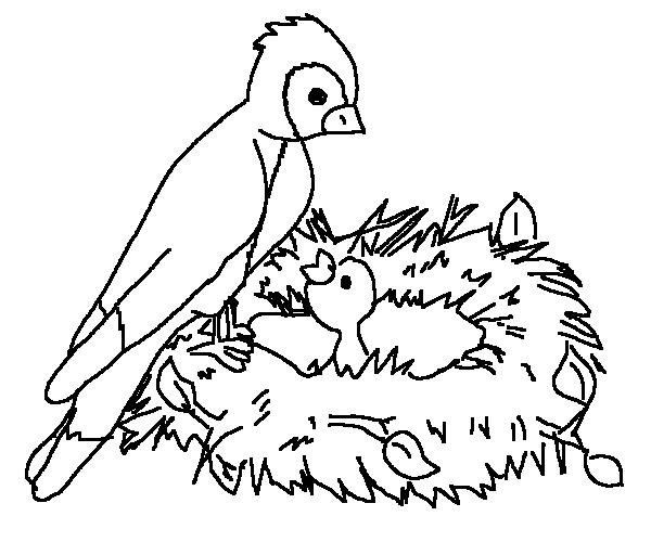 600x500 Bird On Nest Spring Animal Coloring Pages
