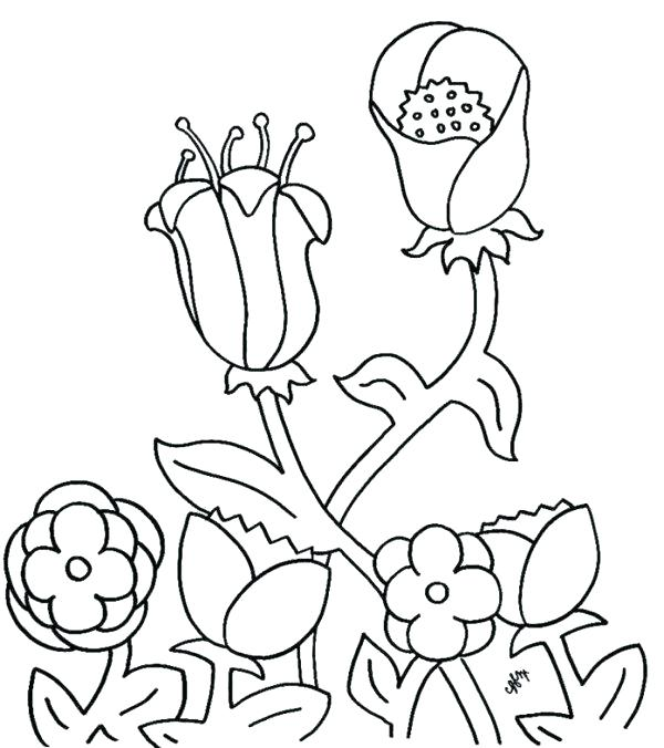 600x676 Spring Flower Coloring Sheets Spring Break Coloring Sheets Free