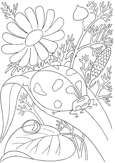 371x525 Springtime Coloring Pages Spring Flower Coloring Pages Ladybird