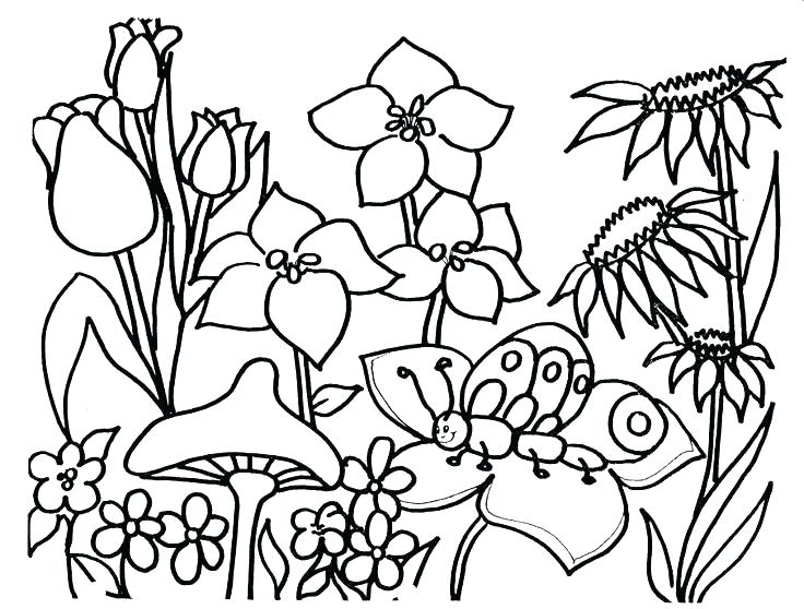 736x558 Free Spring Coloring Pages Elegant Spring Printable Coloring Pages