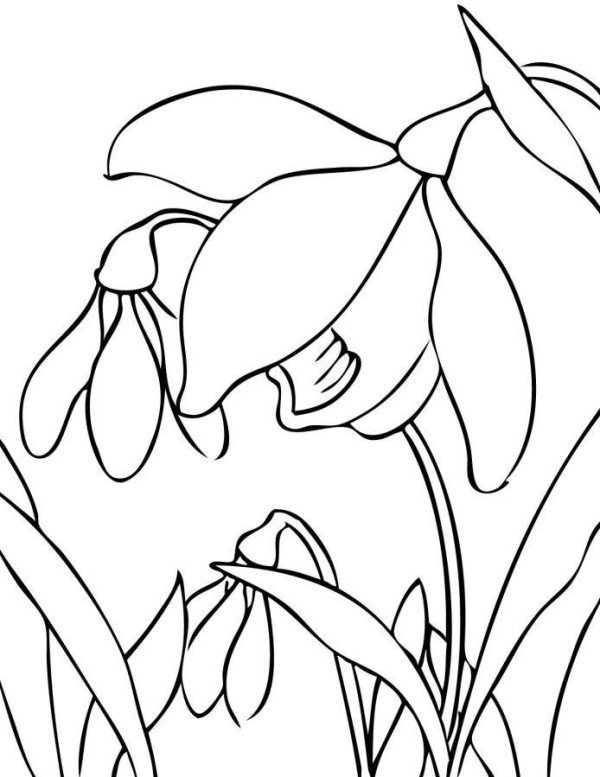 600x777 Printable Spring Flower Coloring Pages